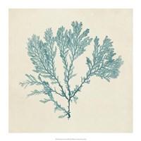 "Chromatic Seaweed VIII by Vision Studio - 17"" x 17"""