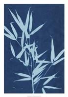 Cyanotype No.2 Fine Art Print