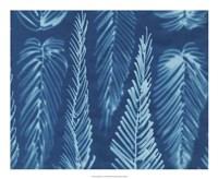"""Cyanotype No.8 by Renee Stramel - 22"""" x 18"""""""