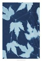 """Cyanotype No.10 by Renee Stramel - 18"""" x 26"""""""