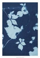 """Cyanotype No.11 by Chariklia Zarris - 18"""" x 26"""""""