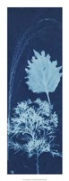 "Cyanotype No.13 by Jenna Guthrie - 10"" x 26"""