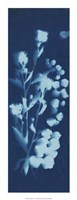 "Cyanotype No.14 by Jenna Guthrie - 10"" x 26"""