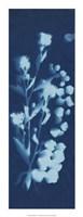 Cyanotype No.14 Fine Art Print