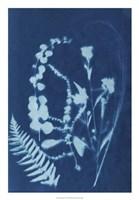 Cyanotype No.16 Fine Art Print