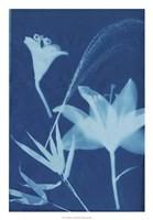 Cyanotype No.19 Fine Art Print