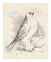 Meyer Snowy Owl Fine Art Print