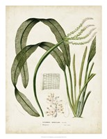"""Tropical Grass I by Vision Studio - 20"""" x 26"""""""