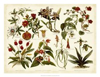 Tropical Botany Chart II Fine Art Print