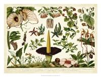 Tropical Botany Chart III Fine Art Print