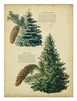 "20"" x 26"" Pine Tree"