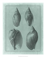 """Spa Shell Collection III by Vision Studio - 18"""" x 22"""" - $27.99"""