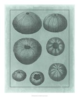 """Spa Shell Collection V by Vision Studio - 18"""" x 22"""" - $27.99"""