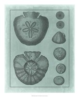 """Spa Shell Collection VI by Vision Studio - 18"""" x 22"""" - $27.99"""