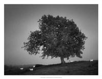 "Evening Light I by Martin Henson - 26"" x 20"""