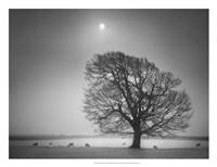 "Evening Light II by Martin Henson - 26"" x 20"""