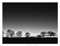 "Treeline Light by Martin Henson - 26"" x 20"""