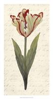 "Twin Tulips I by Grace Popp - 14"" x 26"""