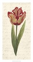 """Twin Tulips II by Grace Popp - 14"""" x 26"""""""