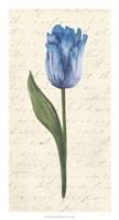 """Twin Tulips III by Grace Popp - 14"""" x 26"""""""