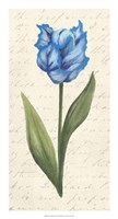 "Twin Tulips IV by Grace Popp - 14"" x 26"""