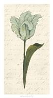 """Twin Tulips V by Grace Popp - 14"""" x 26"""""""