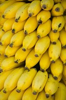 Oman, Dhofar Region, Salalah. Local bananas for Sale Fine Art Print
