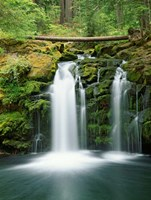 View of Whitehorse Falls, Umpqua National Forest, Oregon by Jaynes Gallery - various sizes, FulcrumGallery.com brand