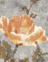 Spice Poppy I Fine Art Print