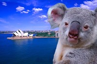 Portrayal of Opera House and Koala, Sydney, Australia Fine Art Print