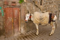 Donkey and Cobbled Streets, Mardin, Turkey Fine Art Print
