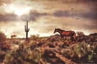 Desert Horse Fine Art Print