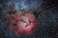 The Trifid Nebula Fine Art Print