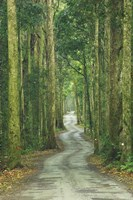 Road through Rainforest, Lamington National Park, Gold Coast Hinterland, Queensland, Australia Fine Art Print