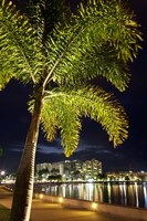 Cairns, waterfront at night, North Queensland, Australia by David Wall - various sizes