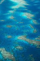 Undine Reef, Great Barrier Reef, Queensland, Australia by David Wall - various sizes
