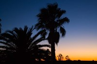 Palm Trees, Sunset, Stuart Highway, Outback, Australia by David Wall - various sizes, FulcrumGallery.com brand