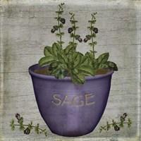 Herb Sage Fine Art Print