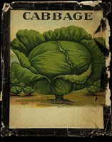 Vintage Cabbage by Beth Albert - various sizes, FulcrumGallery.com brand