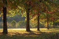Australia, New South Wales, Khancoban, Autumn by David Wall - various sizes