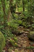 Stream, Wooroonooran National Park, North Queensland, Australia by David Wall - various sizes