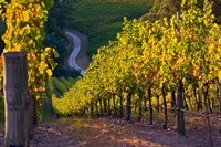 Australia, Adelaide Hills, Summertown vineyard Fine Art Print
