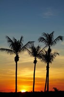 Beach, Palm trees, Mindil Beach, Darwin, Australia Fine Art Print