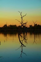Dead trees, Lily Creek Lagoon, Lake Kununurra, Australia by David Wall - various sizes