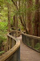 Footpath Through Forest to Newdegate Cave, Tasmania, Australia by David Wall - various sizes - $37.49
