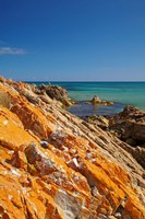 Orange Lichen, Green Point, Ann Bay, Australia by David Wall - various sizes