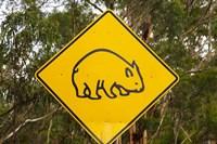 Wombat warning sign, Tasman Peninsula, Australia by David Wall - various sizes, FulcrumGallery.com brand