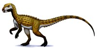 Scutellosaurus Fine Art Print