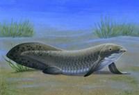 Ceratodus Fine Art Print