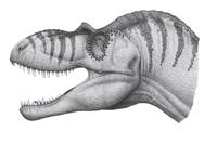 Headshot of an Albertosaurus Sarcophagus Fine Art Print